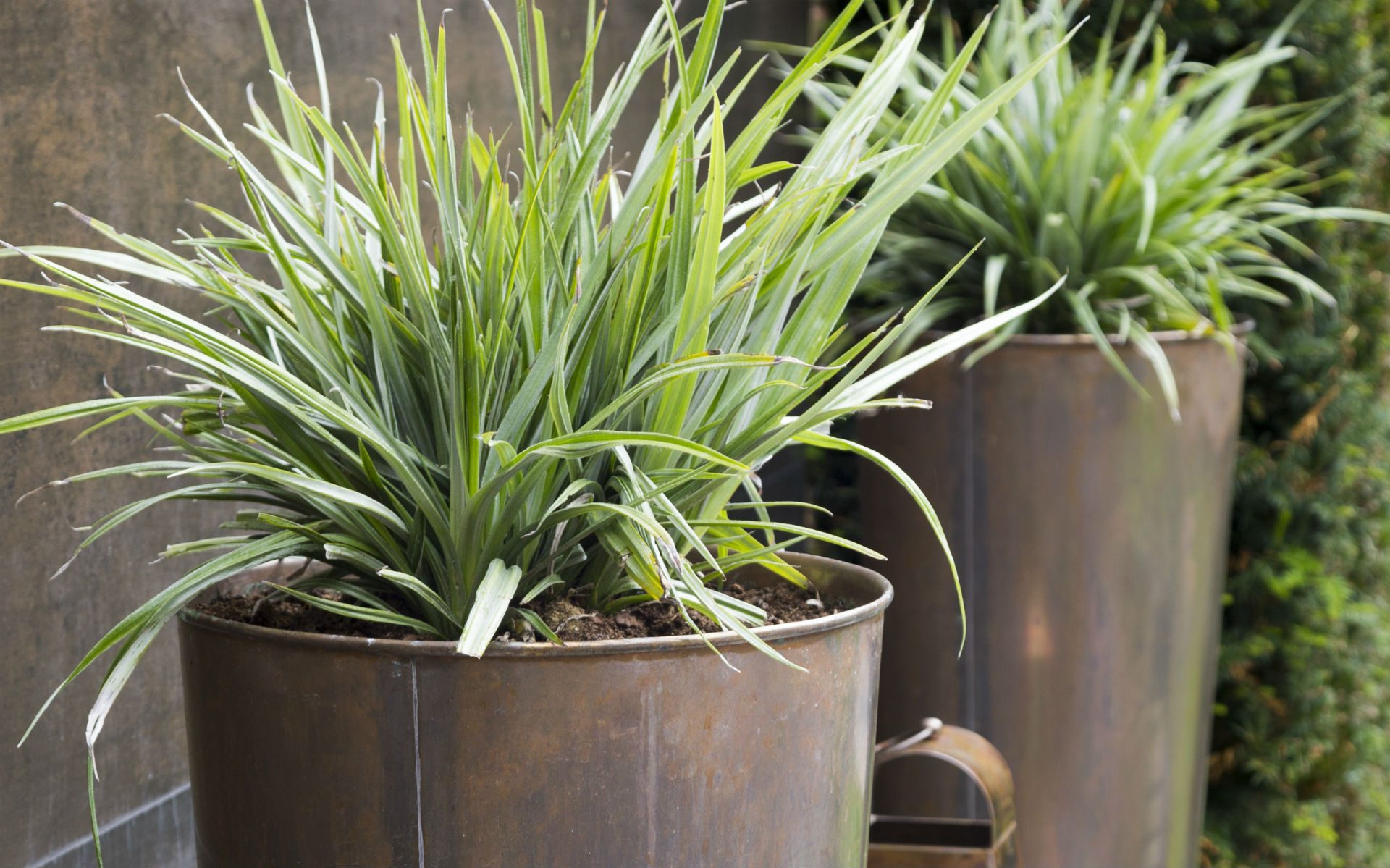 Portfolio BALI Award Winning Small Urban Garden Beaulieu Chelmsford Essex Copper Vas Planters