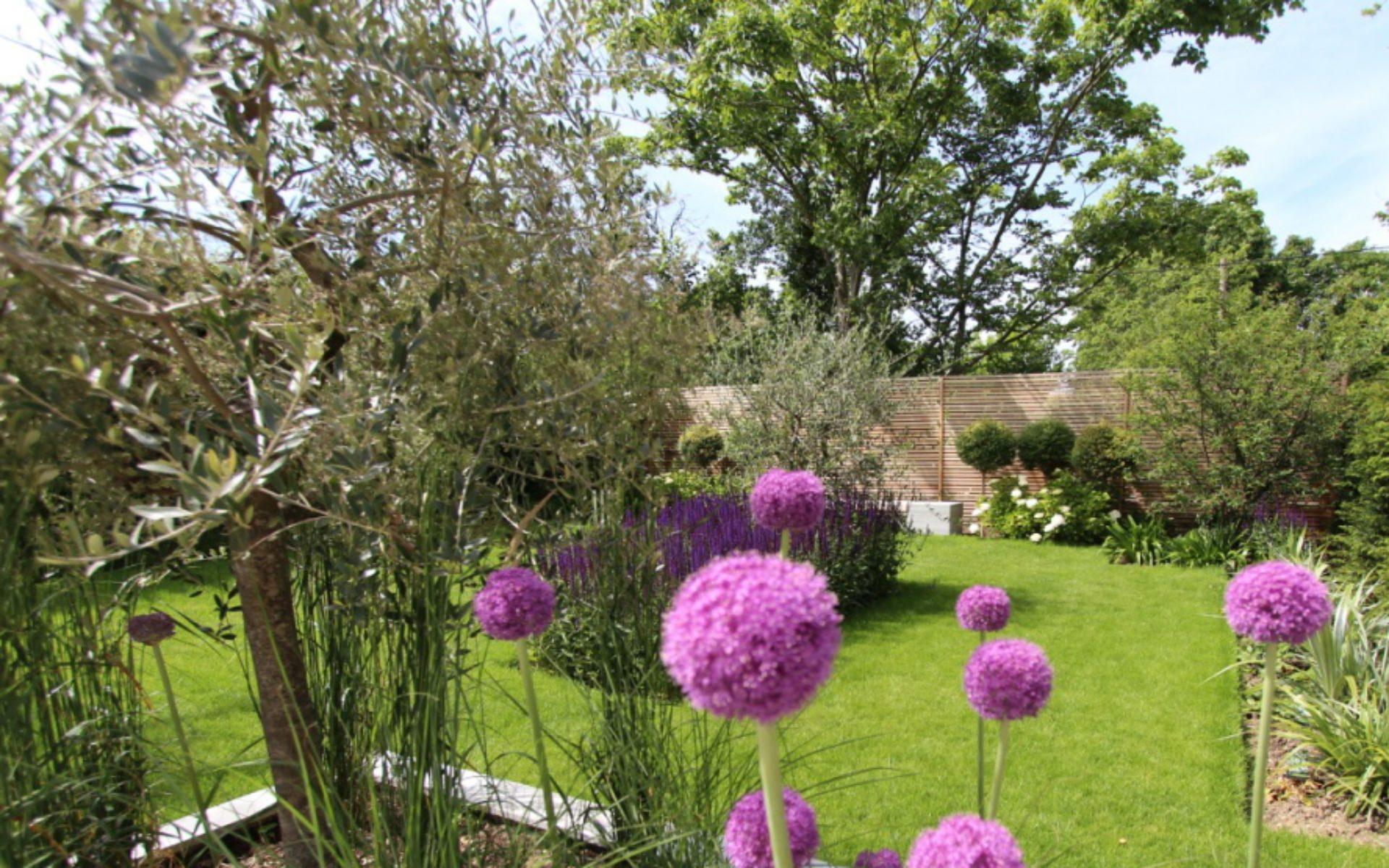 Portfolio Contemporary Front Garden Little Baddow Essex Alliums