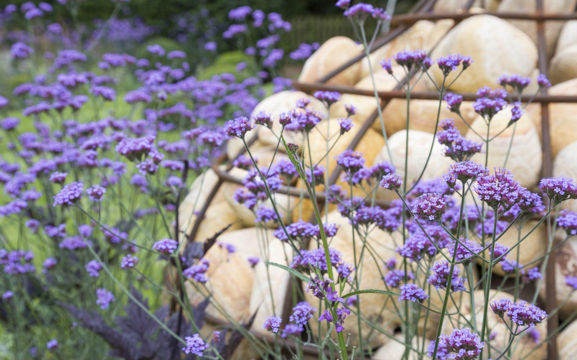 Portfolio Multi-level Contemporary Garden Stock Essex Gabion Feature
