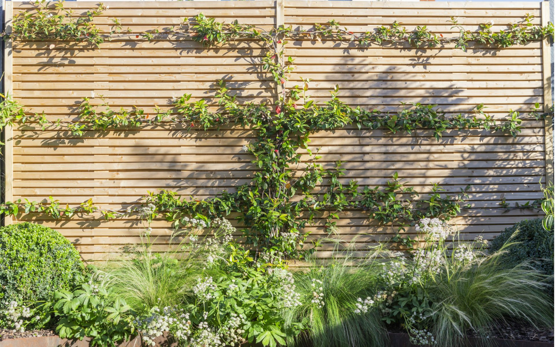 Portfolio Small Urban Garden Beaulieu Essex Feature Cedar Slatted Fence Jasmine