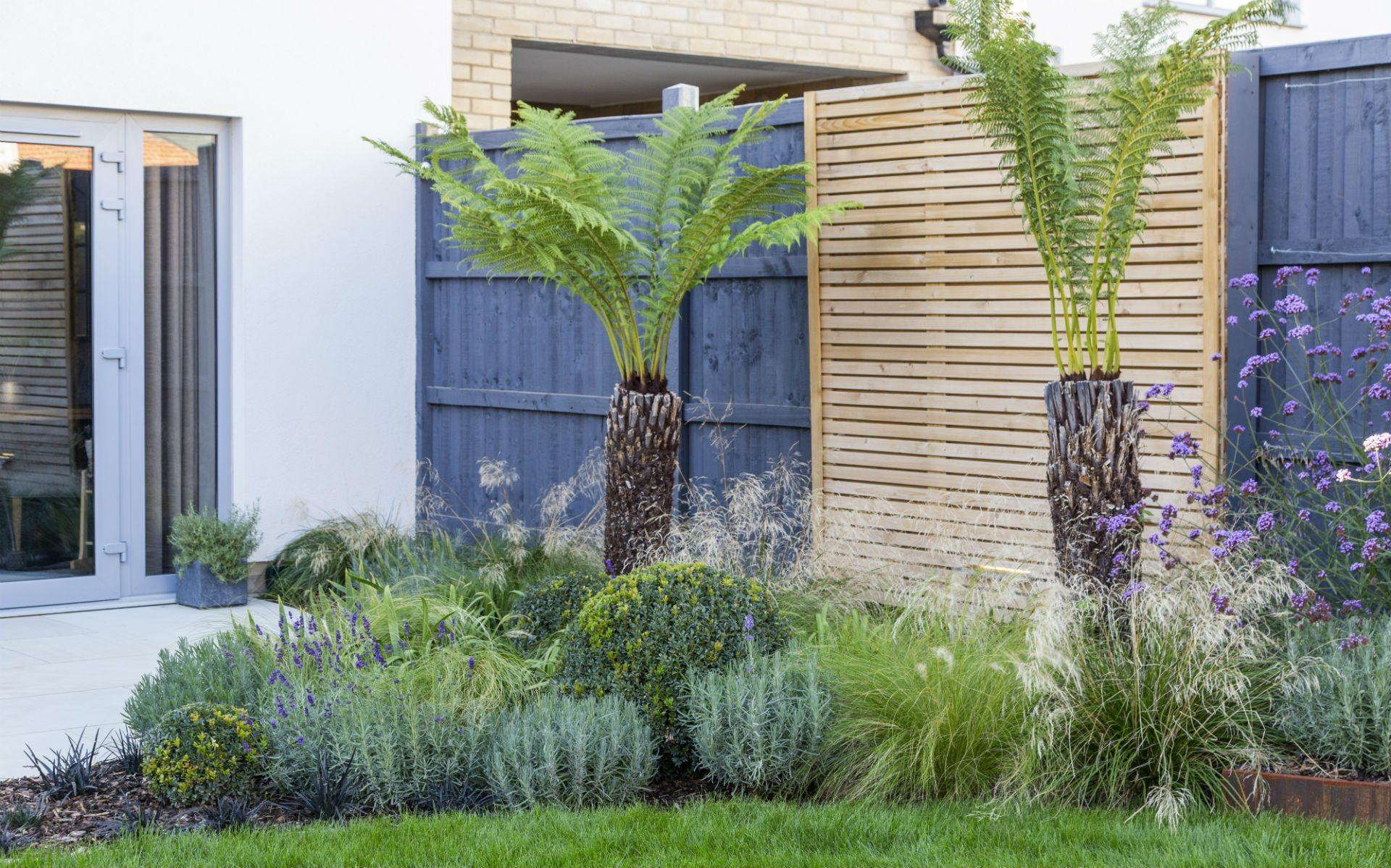 Portfolio Small Urban Garden Beaulieu Essex Tropical Planting Ferns