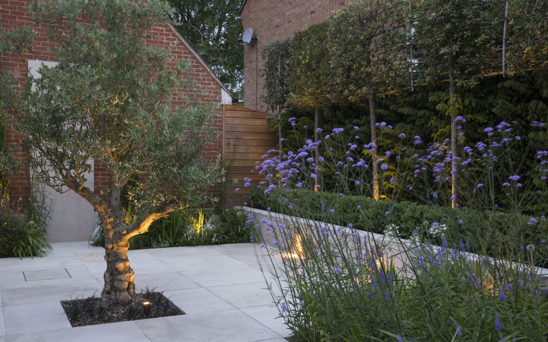 Contemporary Living Garden and Courtyard Shenfield Essex Olive and Pleached Quercus Ilex Raised Beds