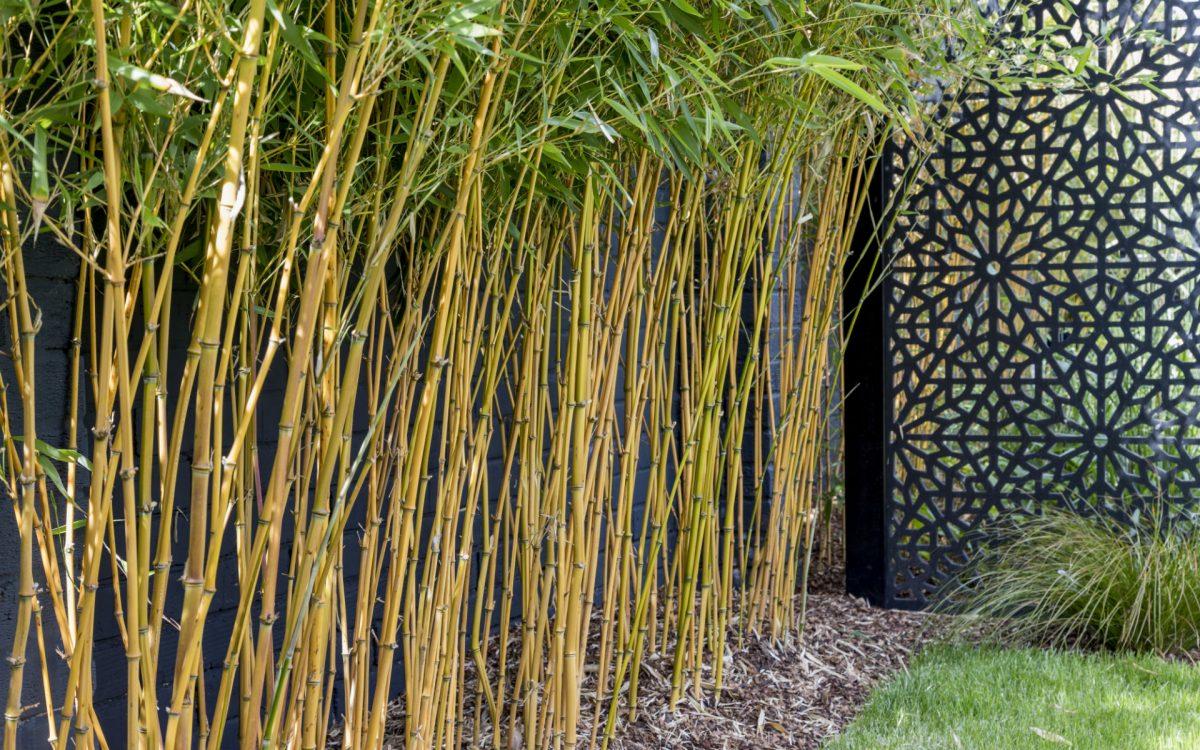 Asian Inspired Contemporary Garden Golden Bamboo Art Panels Garden Screens Essex